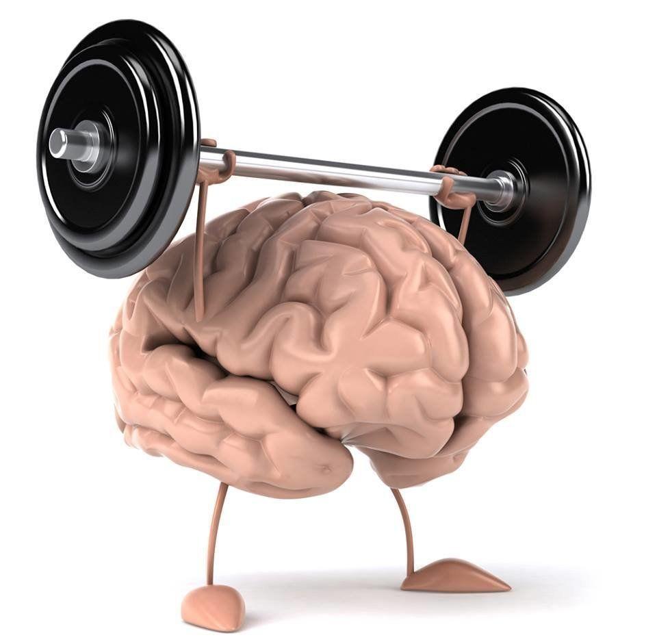 Картинки эволюции мозга